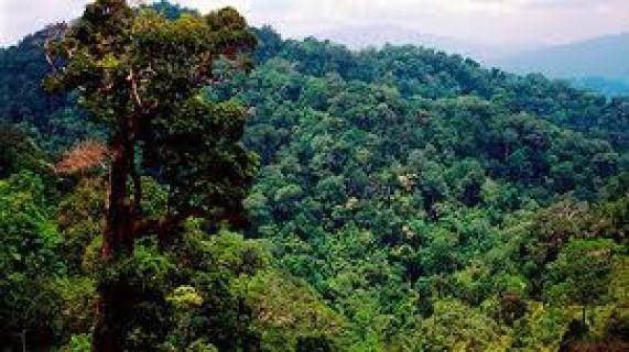 Phân tích hình tượng cây xà nu trong rừng xà nu hay nhất