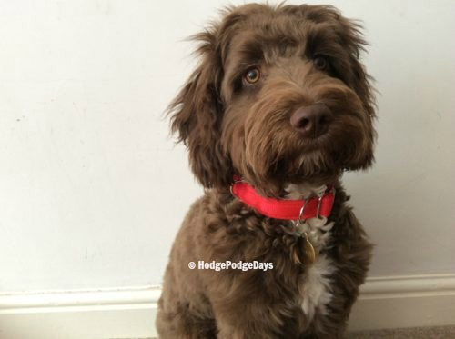 Pets: Review & Giveaway - Meg Heath Dog Leads & Collars