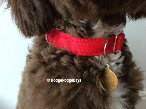 Review - Meg Heath Dog Leads & Collars