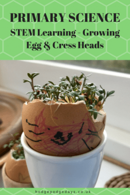 STEM Learning: Growing Egg and Cress Heads