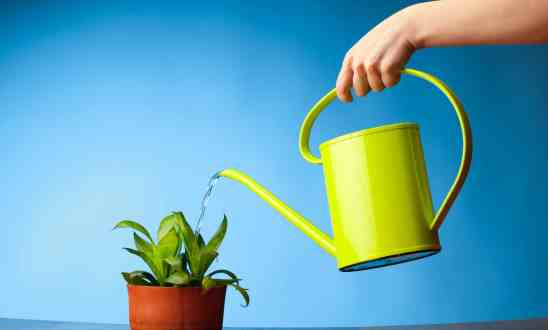 Hand holding a lime green water can, watering a small indoor plant