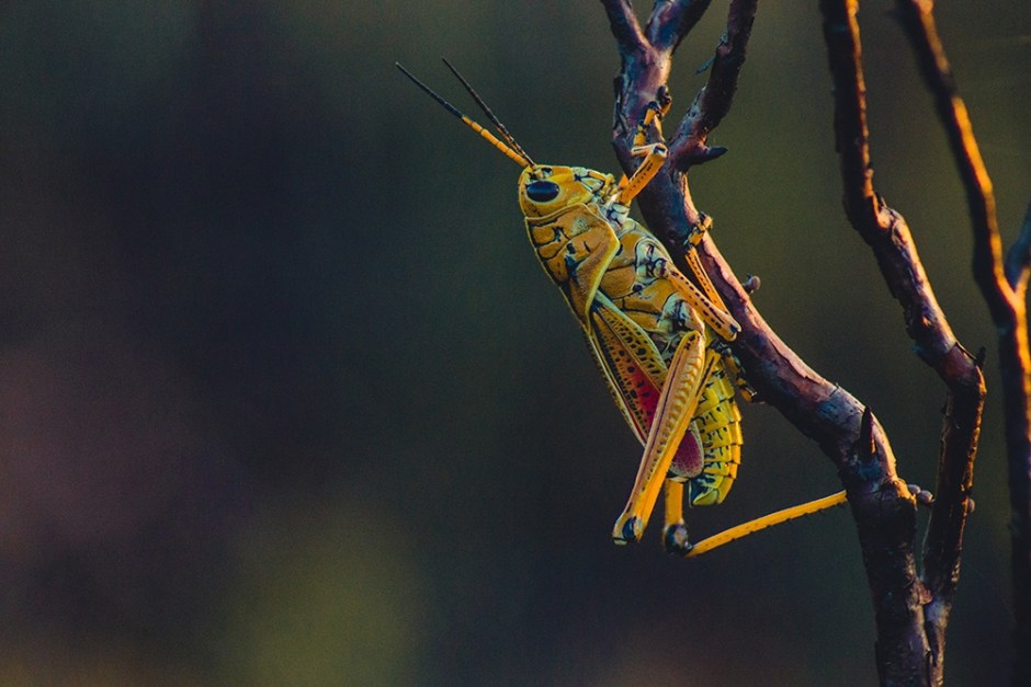 Do insects feel pain?