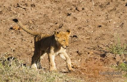 2011_07_27_Kruger_National_Park_1142