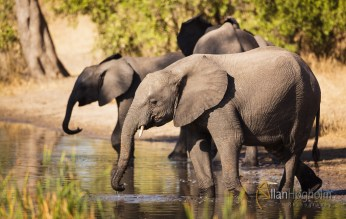 Outside on of our camps, there was a small waterhole, which had a lot of visitors by all kind og animals, including this elephant family.
