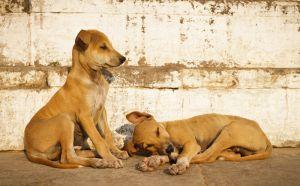 2011_03_15_Varanasi_300.jpg