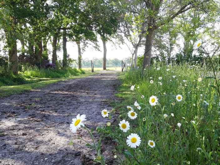 Oprijlaan Hoeve Heide en Wold