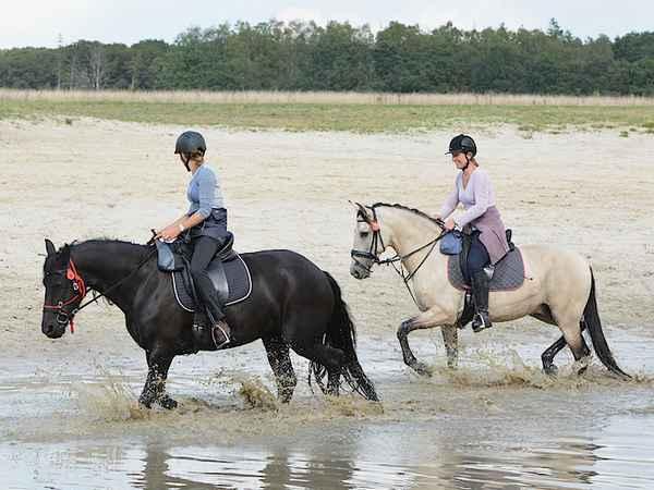Paardrijden Drents-Friese Wold