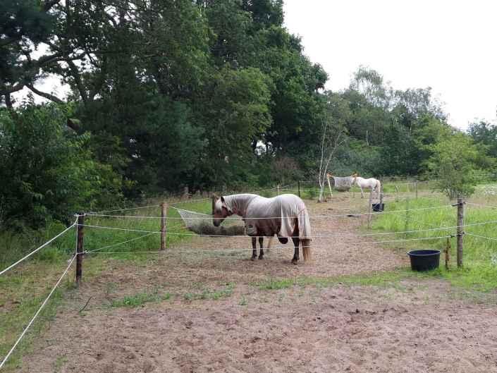 Vakantie met je paard Drenthe