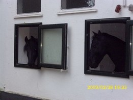 lueneburg-heide-friese-pferd-urlaub-drolshagen-essinghausen-dsci1217 Urlaubsgrüße RG-Hof-Höherhaus  Urlaub Lüneburger Heide Kornelius Klaas