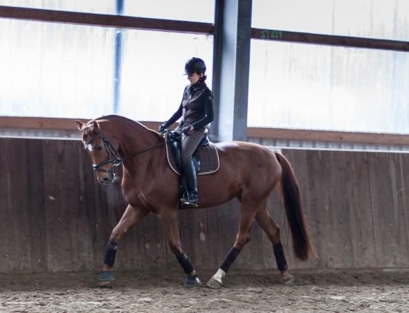 drolshagen-essinghausen-pferd-sitztraining1 Dressurlehrgang mit Rolf Grebe RG-Hof-Höherhaus  Rolf Grebe Dressur Lehrgang