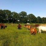 Ferien der Schulpferde und -ponies