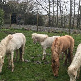 Mini-paardjes bij Hof ter Meulen
