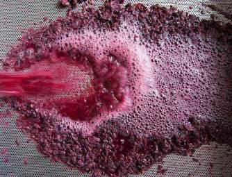 Filtro de vino