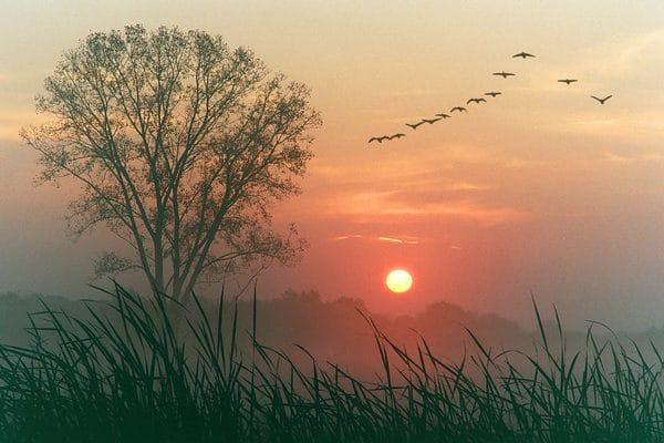 El mejor despertador simulador de amanecer: Comparativa y guía de compra