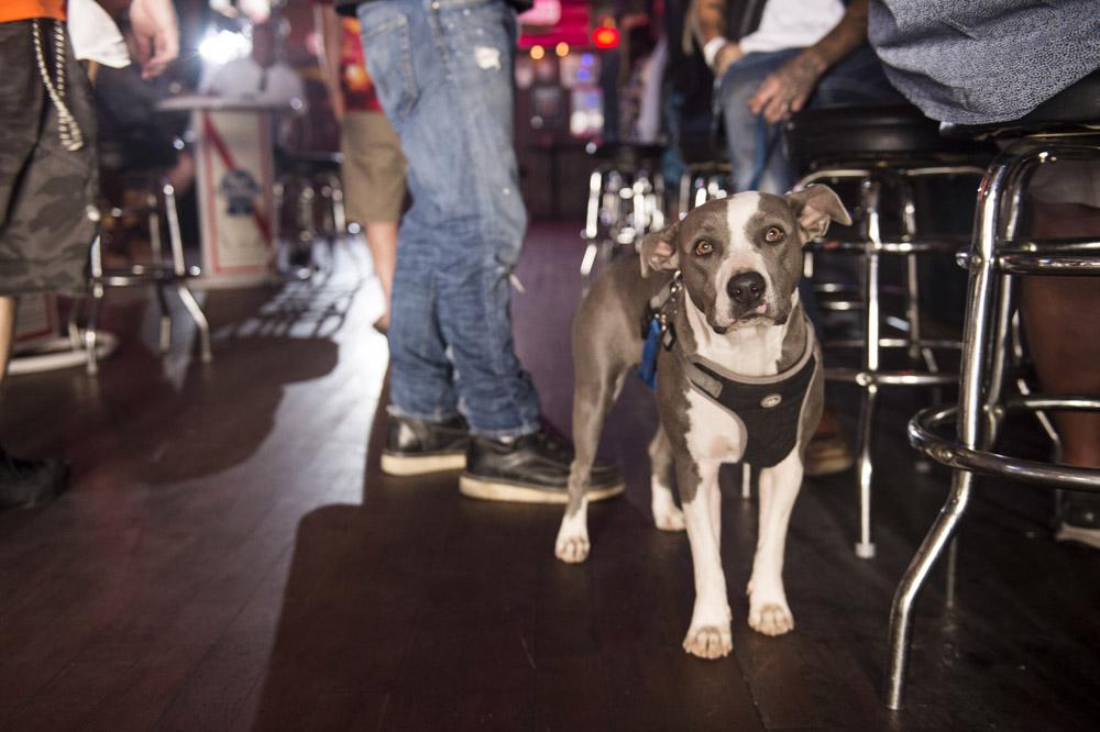 Hogs & Heifers Saloon Las Vegas_Motorcycle Rally_000301