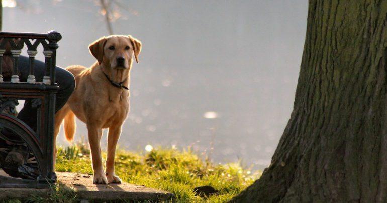 training rescue dog tips