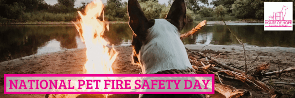 National Pet Fire Safety Day