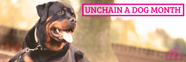Unchain a Dog Month - Nonprofit Dogs