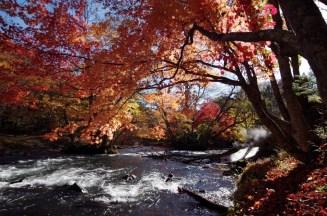 紅葉の阿寒川