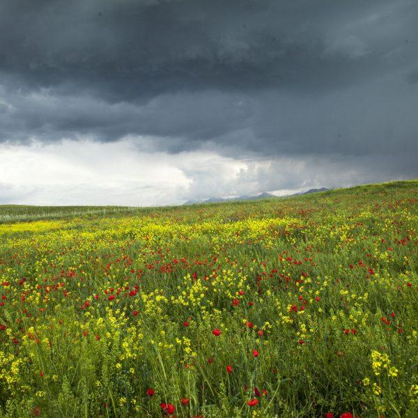 Abandoned field before rain