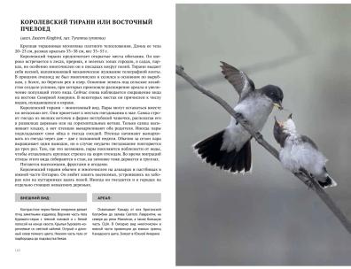 Birds2-3