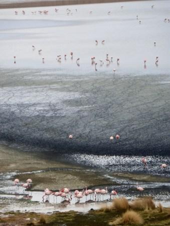 Laguna Cañapa: Flamingoparadies