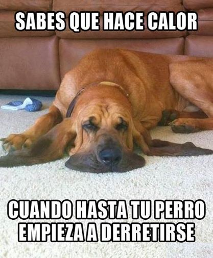 Perro derretido.-