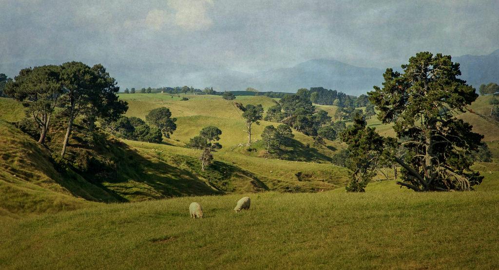 paisaje_rural_nueva_zelanda