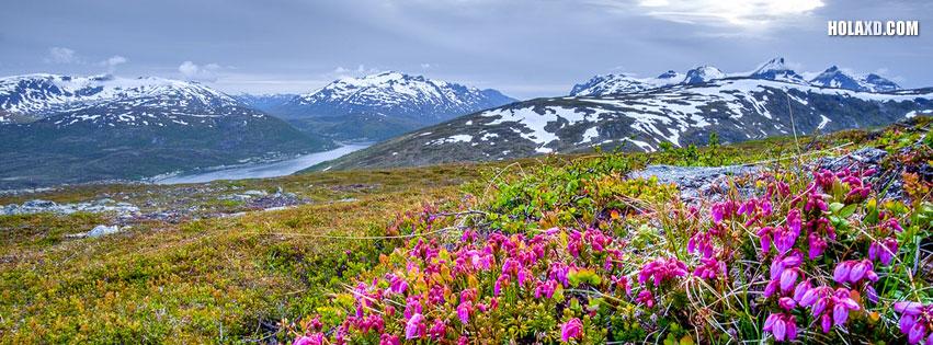 flores-montana-nevada