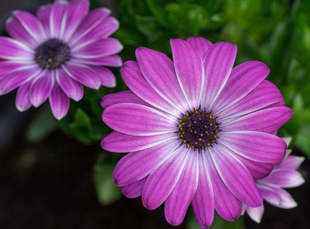 flores-gerberas-img266