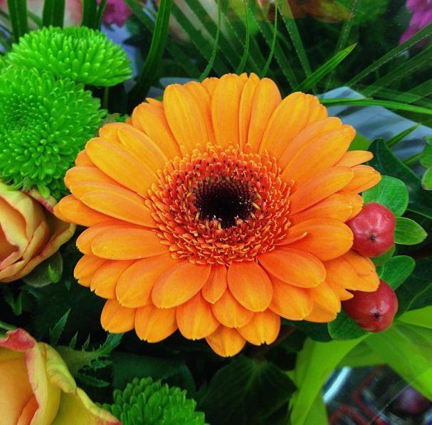 flores-gerberas-img514