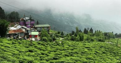 A Darjeeling tea