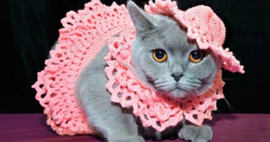 Itt van az első transznemű macska