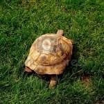 trawa-zielona-zwierząt_14830254