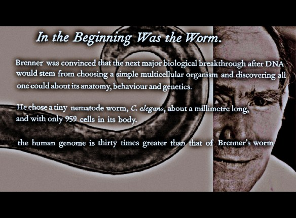 In the beginning was the worm