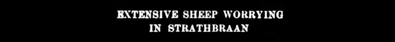 1904 Rosecraig, Strathbraan - sheep worrying