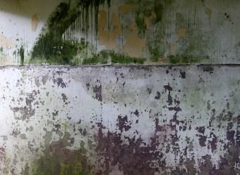 Glenour [Glenover] farm, South Ayrshire - Monday 20 July 2020 (10)
