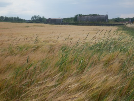 Covered reservoir 1882, near Mains of Buckie (visited 1 Aug 2020) (2)