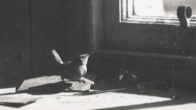 Robert Atkinson, 1938, St Kilda (2)