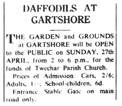 1952 Daffodils at Gartshore