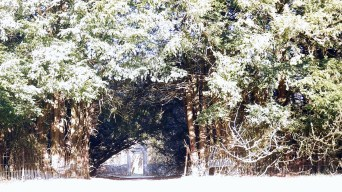 Peter Gordon visits Gartshore gardens - Monday 12 April 2021 (2)