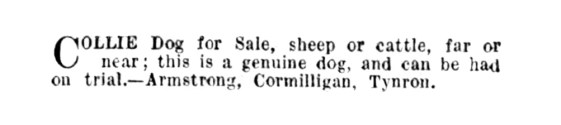 Oct 1940 Cormilligan, Collie dog for sale