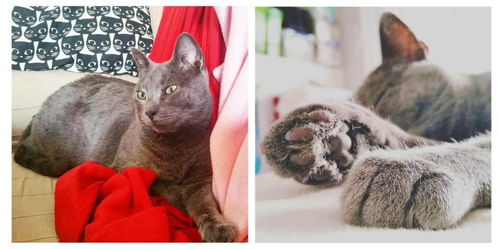 rescue cat Spain
