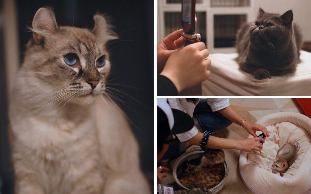 Cat cafe Tokyo Japan