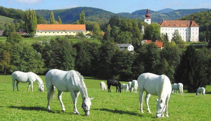 Austria-tour-Federal-Stud-Piber