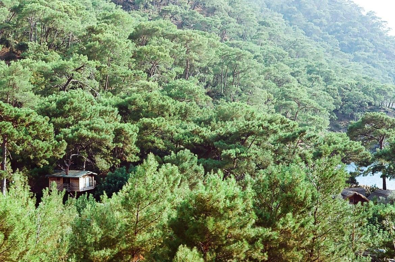 kabak tree house