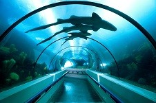 Отдых на Карибских островах, Доминикана - Национальный аквариум,
