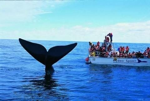 Отдых на Гавайских островах - наблюдение за китами в Мауи