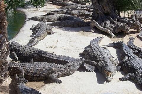 Отдых на Джербе, Тунис - ферма по выращиванию крокодилов