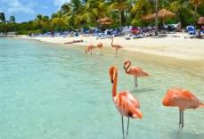 Отдых на Джербе, Тунис - розовые фламинго